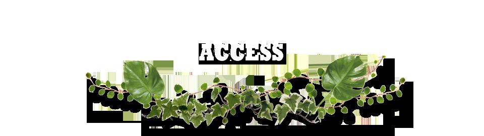 ACCESS・アクセス